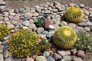 Cactus et plantes fleurs jaunes sur gros cailloux