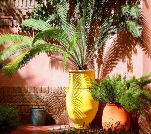 Pots colorés de plantes exotiques devant un mur brun